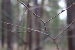 O ramo na Web Fotos de Stock