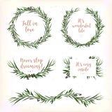 O ramo verde redondo da baga da grinalda da folha do círculo das folhas do eucalipto seja ilustração royalty free