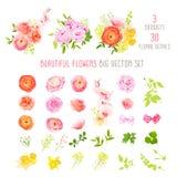 O ranúnculo, aumentou, peônia, narciso, flores da orquídea e coleção grande do vetor das plantas decorativas Fotos de Stock