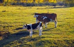 O rancho da noite Fotos de Stock