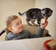 O rapaz pequeno compartilha do alimento com o gato fotografia de stock
