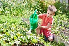 O rapaz pequeno derrama o jardim vegetal Foto de Stock Royalty Free