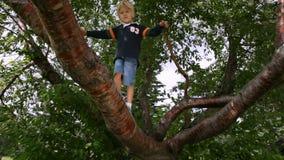 o rapaz pequeno está escalando em uma árvore vídeos de arquivo