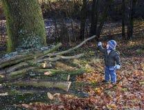 O rapaz pequeno inspeciona ramos de árvore desbastados com um galho em um parque Fotos de Stock Royalty Free