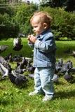O rapaz pequeno que alimenta os pombos em um parque da cidade imagem de stock