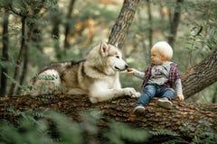 O rapaz pequeno senta-se no tronco de árvore ao lado do malamute e da taxa de encontro do cão imagens de stock royalty free