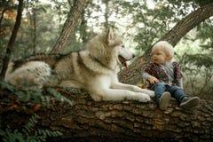 O rapaz pequeno senta-se no tronco de árvore ao lado do malamute de encontro do cão imagens de stock royalty free