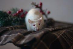 O rato é branco em um pano quadriculado com uma árvore de Natal foto de stock royalty free