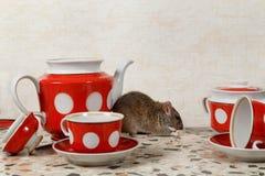 O rato come perto do bule e do açucareiro na bancada na cozinha em uma casa fotografia de stock
