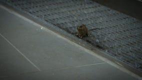 o rato de casa que sneaking comendo a refeição dentro de uma casa