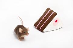 O rato doméstico curioso senta-se ao lado de um bolo do brinquedo do luxuoso Fotos de Stock Royalty Free
