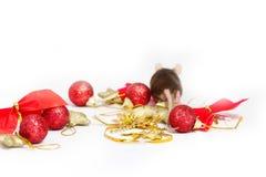 O rato gordo corre longe das decorações do Natal do vermelho e do ouro Foto de Stock