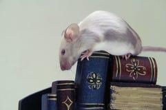 O rato na pilha de livros. imagens de stock
