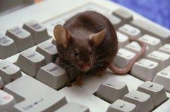 O rato no computador, no teclado imagem de stock