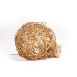 O rato pequeno curioso esconde atrás da bola decorativa Fotografia de Stock Royalty Free