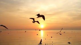 O rebanho das gaivotas voa sobre o mar no por do sol filme