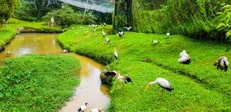 O rebanho de pássaros do flamingo dentro do pássaro do quilolitro estaciona, malaysia 2017 foto de stock