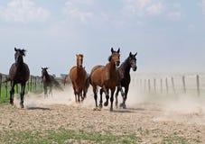 O rebanho do cavalo Fotografia de Stock