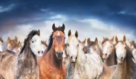 O rebanho dos cavalos fecha acima de, contra o céu nebuloso, a bandeira Fotografia de Stock Royalty Free