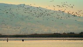 O rebanho dos pássaros é voar à superfície da àgua vídeos de arquivo