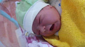 O recém-nascido Imagens de Stock