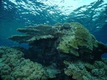 O recife Foto de Stock