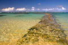 O recife Imagem de Stock Royalty Free