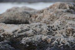 O recife balança o close up Imagens de Stock Royalty Free