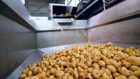 O recipiente industrial está obtendo enchido com as batatas filme