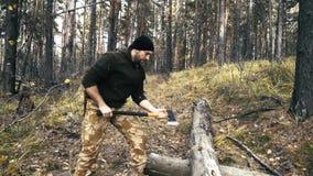 O registador anda com um machado nas madeiras e escolhe árvores vídeos de arquivo