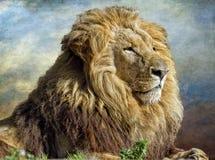O rei do leão Imagens de Stock