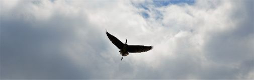 O reiger de Vliegende boven Zwolle Imagens de Stock Royalty Free
