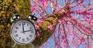 O relógio de ponto da mola floresce o espaço para seu texto, fundo da natureza fotografia de stock