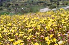 O relógio que do pasto as flores crescem Foto de Stock