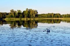 O relaxamento no lago Imagens de Stock Royalty Free