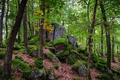 O relvado bonito cobriu pedras com o musgo verde na floresta mágica Imagens de Stock