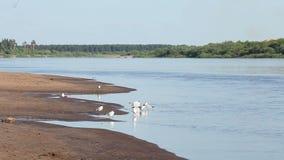 O resto nos povos do voleibol das gaivotas da praia do rio toma sol pescadores no barco de prazer do barco filme
