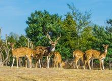 O retrato animal da família de um cervo com faz junto em uma cena da paisagem da natureza fotos de stock