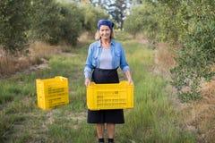 O retrato da terra arrendada feliz da mulher colheu azeitonas na caixa Imagens de Stock