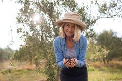 O retrato da terra arrendada feliz da mulher colheu azeitonas na exploração agrícola Imagem de Stock Royalty Free
