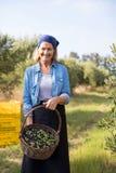 O retrato de feliz da terra arrendada da mulher colheu azeitonas na cesta Imagens de Stock