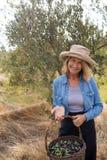 O retrato de feliz da terra arrendada da mulher colheu azeitonas na cesta Fotografia de Stock