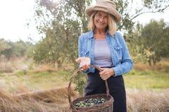 O retrato de feliz da terra arrendada da mulher colheu azeitonas na cesta Fotografia de Stock Royalty Free