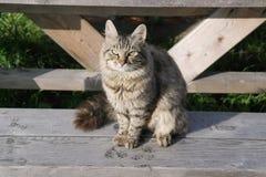 O retrato do gato Fotografia de Stock Royalty Free