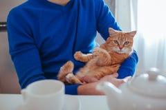 O retrato do homem novo consider?vel guarda um gato vermelho em seus bra?os na cozinha fotos de stock