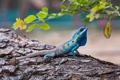 O retrato do lagarto selvagem fotos de stock