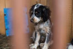 O retrato do perfil do cachorrinho desabrigado triste preto e branco está esperando um novo proprietario fotografia de stock
