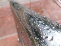 O retrato inteiro da gota da água? descreve ao cofre forte nossas árvores no mundo Foto de Stock Royalty Free