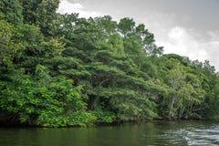 O rio Bentota entre a selva Fotografia de Stock