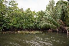 O rio Bentota entre a selva Fotografia de Stock Royalty Free